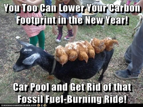transportation,carbon footprint,car,new year,carpooling,goats,chickens