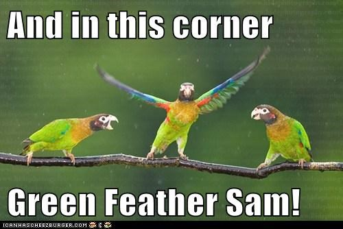 And in this corner  Green Feather Sam!
