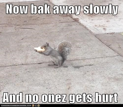 slowly,hurt,stealing,back away,squirrels,bread