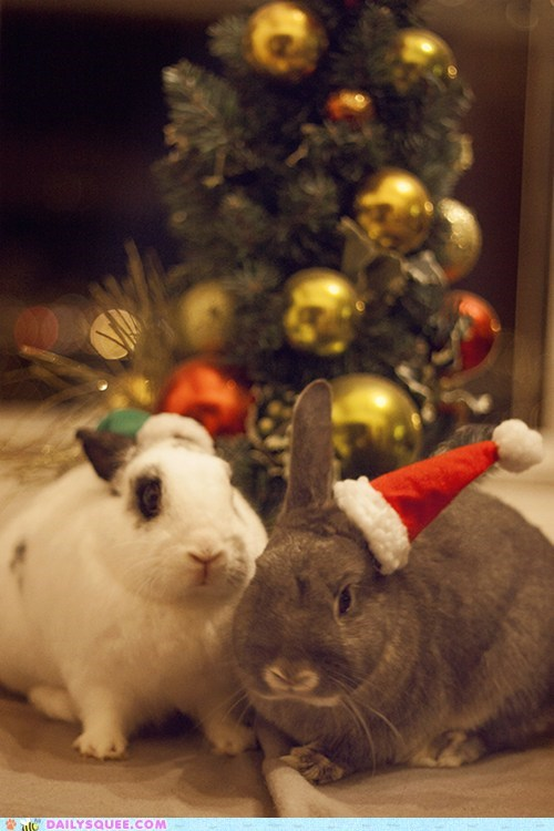 Bunday christmas reader squee pets bunny squee holidays rabbits - 6917571840