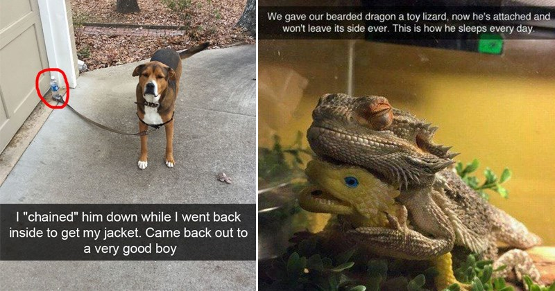 cover image of a dog behaving, bearded dragon loving his toy lizard