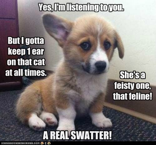 puppy ears attack corgi watch out Cats - 6917665280