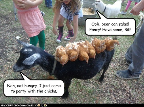 fancy,chicks,goats,puns,beer cans,chickens