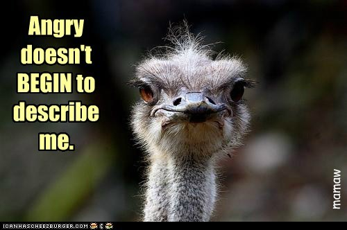 ostriches,fuming,describe,angry,infuriated