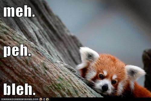 bleh red pandas meh unhappy bored