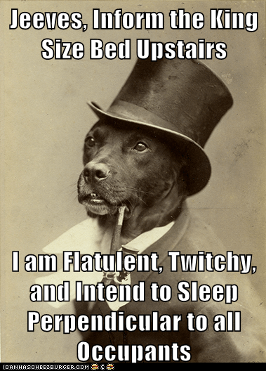sleepytimes farts old money dog