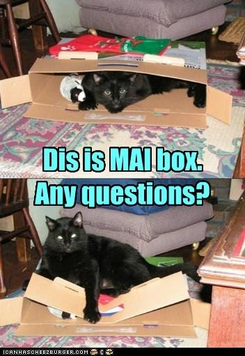 No Sir, Mr. Basment Cat Sir!