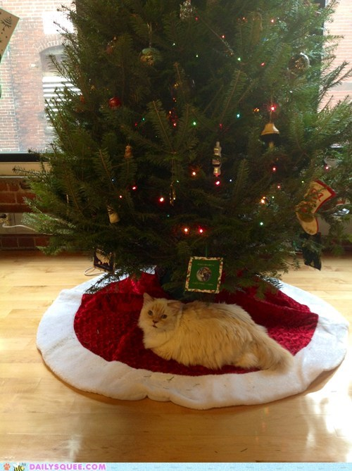 gifts presents reader squee pets christmas tree Cats squee holidays