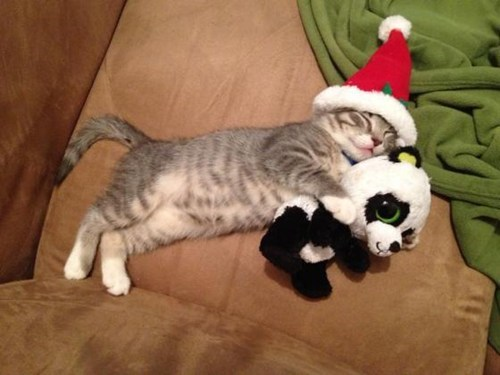 christmas,cat,santa,kitty,funny
