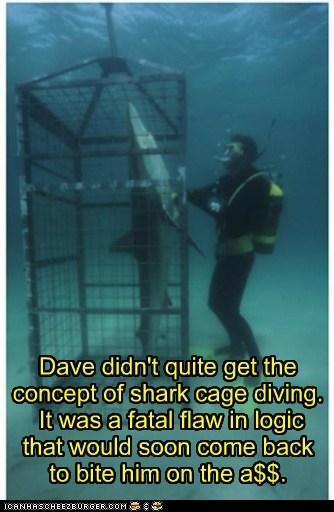 flaw diving shark cage sharks close logic - 6918970624