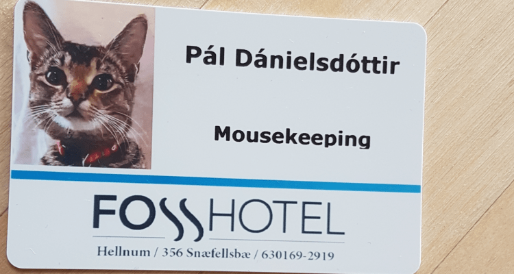 Cat works at a hotel as the mousekeeping