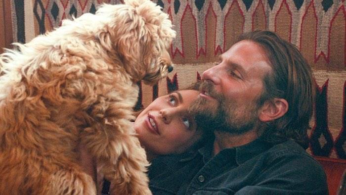 dogs film star bradley cooper - 6919685
