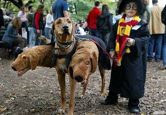 dog and owner costumes for halloween