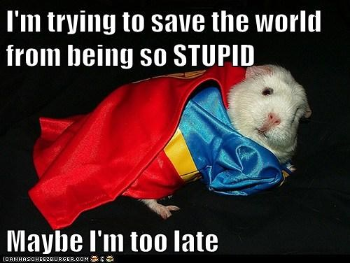 costume,gerbil,superman