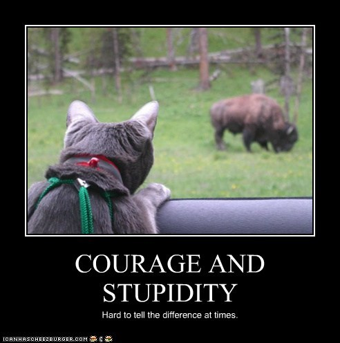 COURAGE AND STUPIDITY Hard to tell the difference at times.