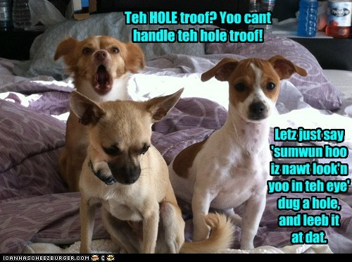 dogs,hole,in trouble,troof,chihuahua,you-cant-handle-the-truth,guilty