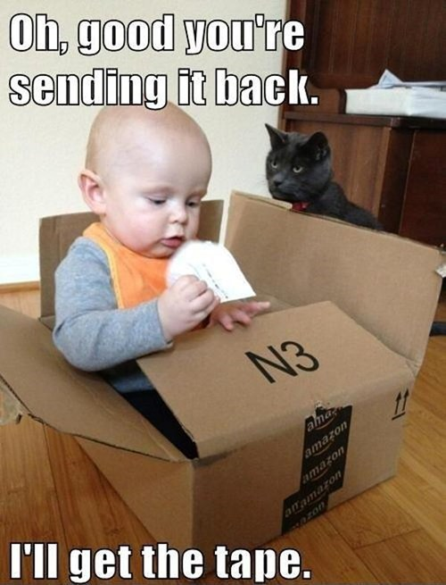 Babies,send it back,cardboard box,return policy,Cats,animals