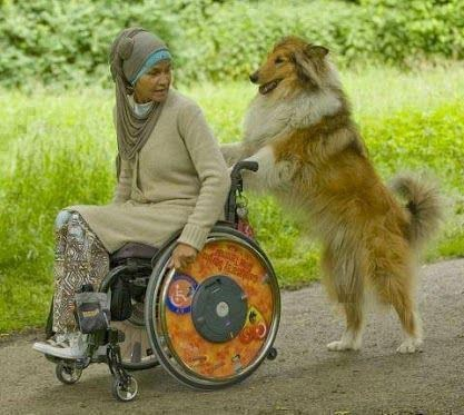 cool,dogs,wtf,wheelchair