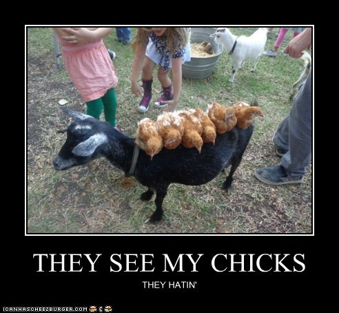 THEY SEE MY CHICKS THEY HATIN'