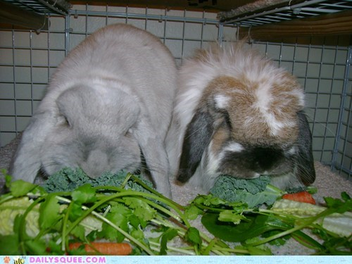 Bunday reader squee munch nom bunny squee rabbits - 6921367552