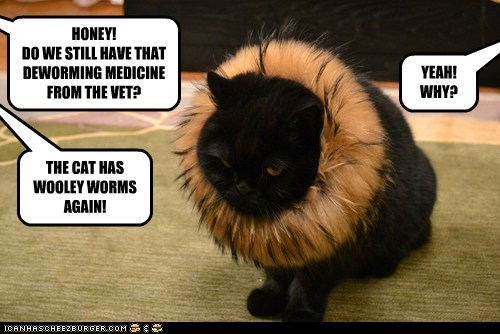 HONEY! DO WE STILL HAVE THAT DEWORMING MEDICINE FROM THE VET? YEAH! WHY? THE CAT HAS WOOLEY WORMS AGAIN!