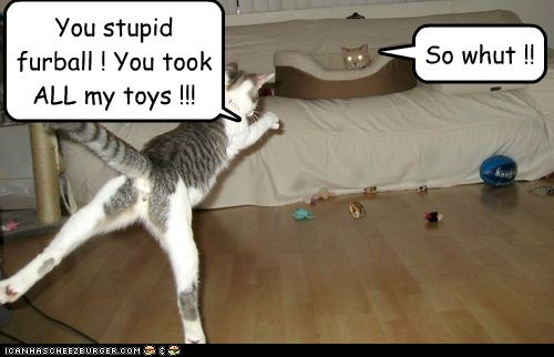You stupid furball ! You took ALL my toys !!! So whut !!