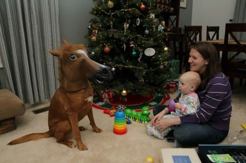baby,horse mask,dogs,g rated,Parenting FAILS