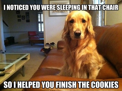 dogs naughty captions naps cookies food eating sleeping guilty - 6923417600