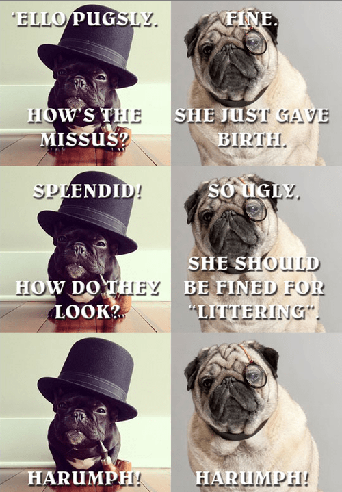 fancy,dogs,jokes,littering,captions,puns,chaps,pugs,ugly,litter