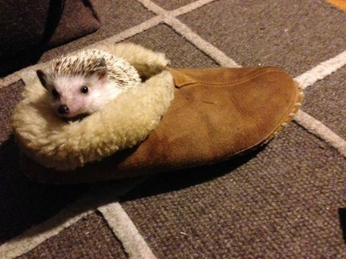 slippers hedgehogs prickly squee