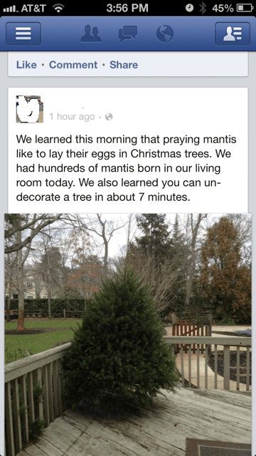 christmas bugs christmas trees mantises failbook g rated