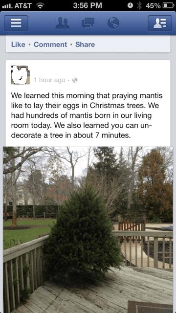 christmas bugs christmas trees mantises failbook g rated - 6923620352
