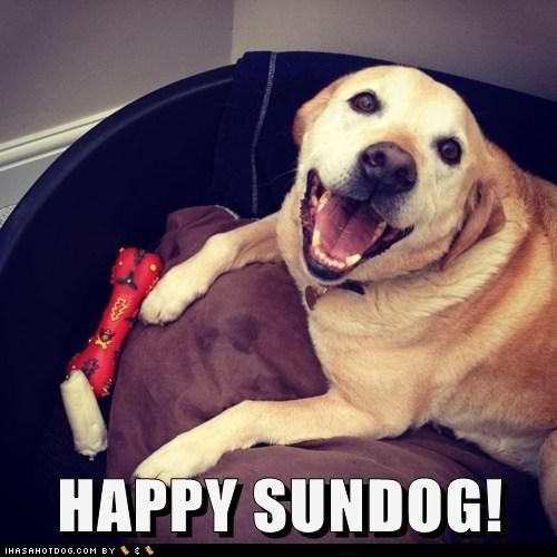 dogs happy sundog smiles Sundog what breed
