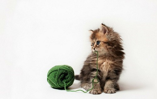 cyoot kitteh of teh day kitten spaghetti yarn Cats - 6924264960