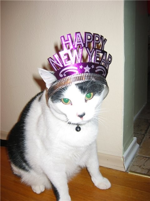 cyoot kitteh of teh day kitten new years new year hats happy new year Cats holidays - 6924270848