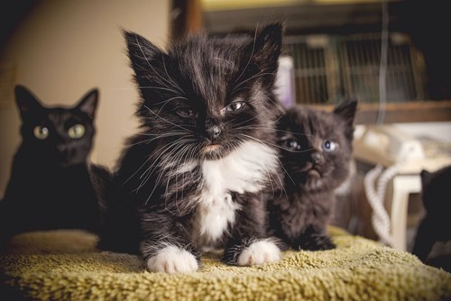 cyoot kitteh of teh day scowling kitten frowning grumpy Cats