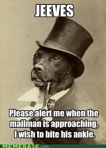 dogs ankle biting old money dog mailmen - 6924384256