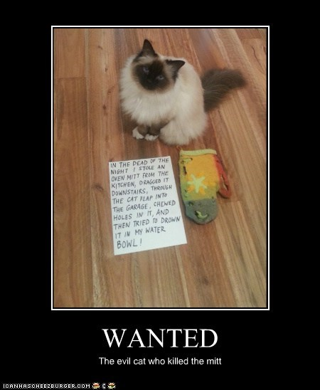 WANTED The evil cat who killed the mitt