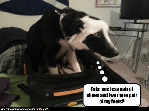 take me with you dogs sad dog suitcase trip what breed