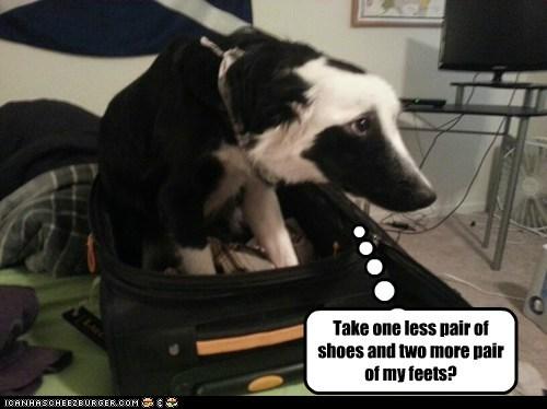 sad dog suitcase trip what breed - 6924465664