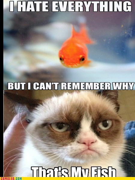 memory,goldfish,Grumpy Cat
