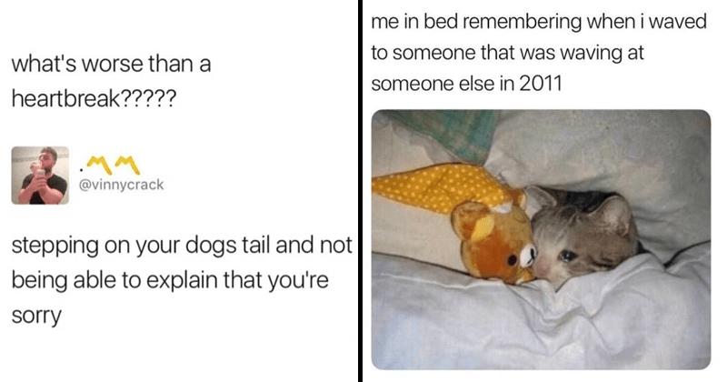 Funny animal memes, cat memes, dog memes.