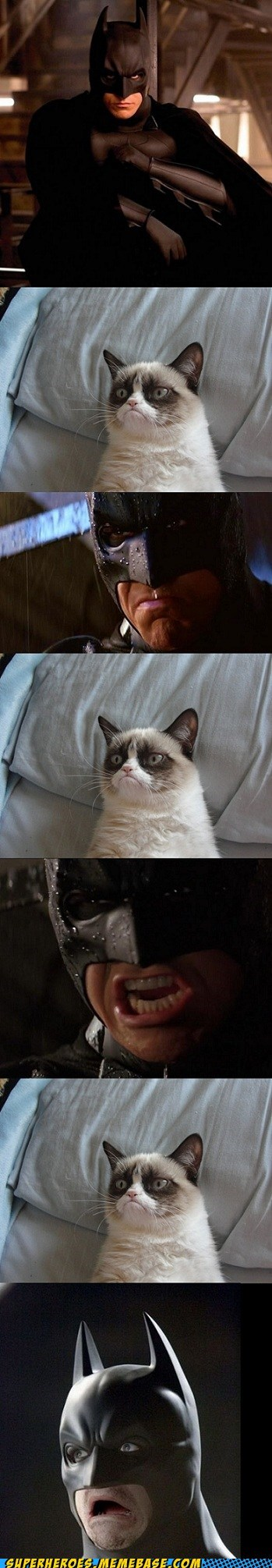 Movie,angry cat,batman,frown