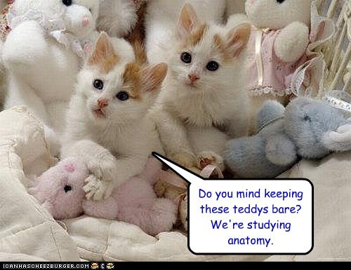 Are they old enough to spay/neuter already?!