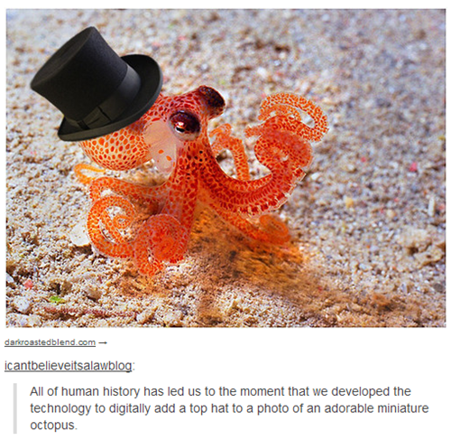 top hat,octopus,poorly dressed,g rated