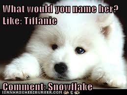 What would you name her?      Like: Tiffanie  Comment: Snowflake
