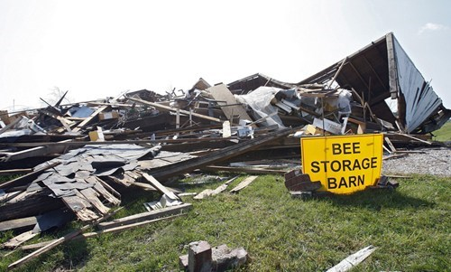 doomed storage accident bees - 6926083072