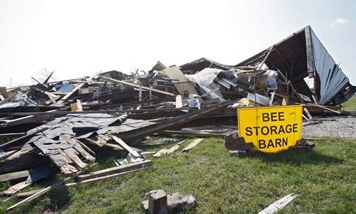 doomed storage accident bees - 6926083072