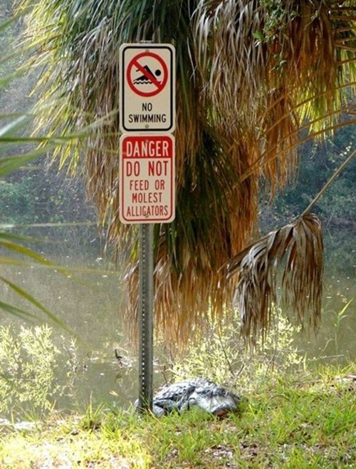 crocodile sign dangerous - 6926180864