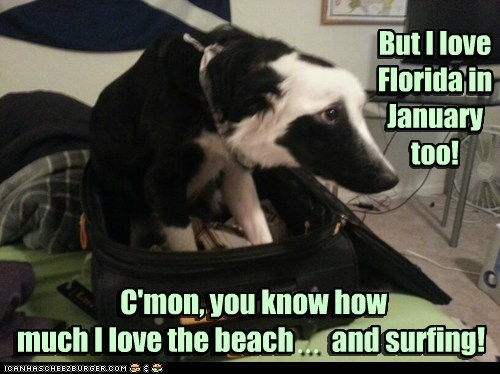 But I love Florida in January too! C'mon, you know how much I love the beach and surfing! ... C'mon, you know how much I love the beach and surfing! But I love Florida in January too!